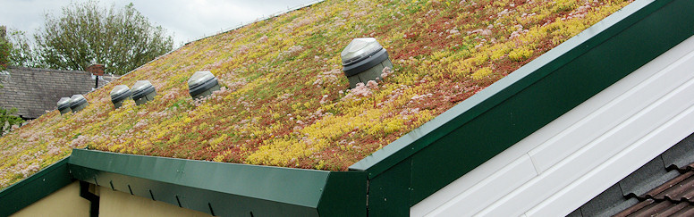 canon burrows primary school extensive green roof icopal. Black Bedroom Furniture Sets. Home Design Ideas